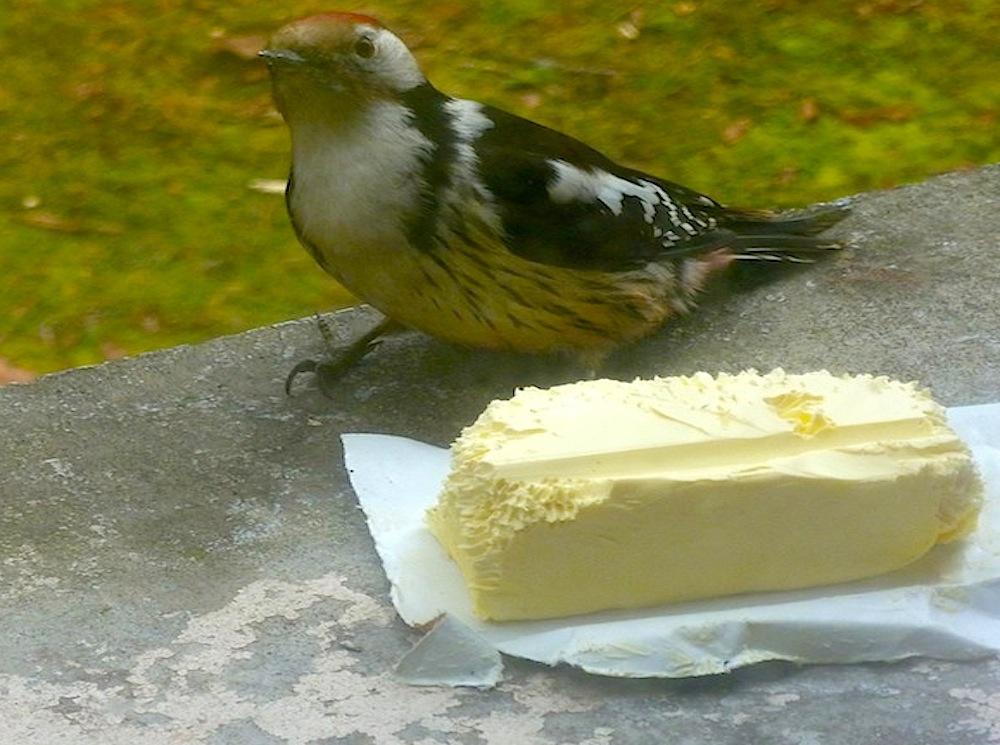Mesanges...1 oiseau dont je ne connais pas le nom...moineau ..tous a la même mangeoire sur ma fenêtre