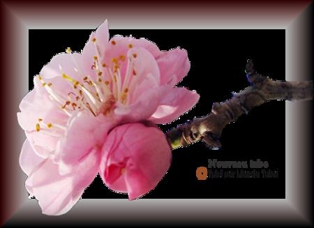 Tube fleurs 2898