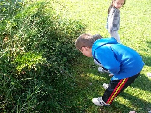 A la recherche d'escargots