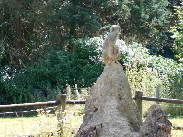 Le Vigen 87: Une petite balade dans ce parc paysager et animalier 3/3