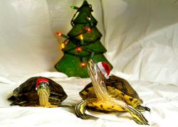 L'enfance c'est de croire qu'avec le sapin de Noël et trois flocons de neige toute la terre est changée