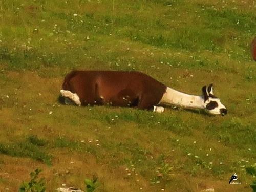 Le sommeil des animaux
