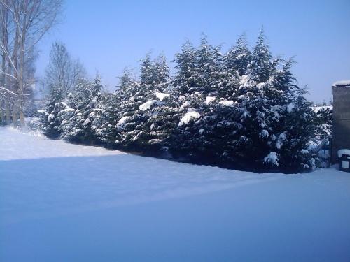 c'est avec la neige que je vous souhaite une bonne journée