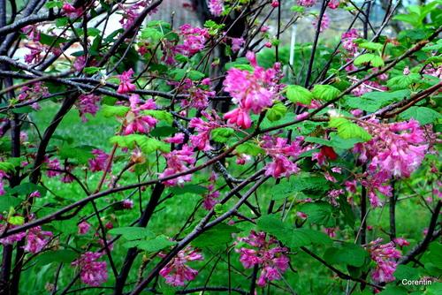 Des fleurs du printemps !