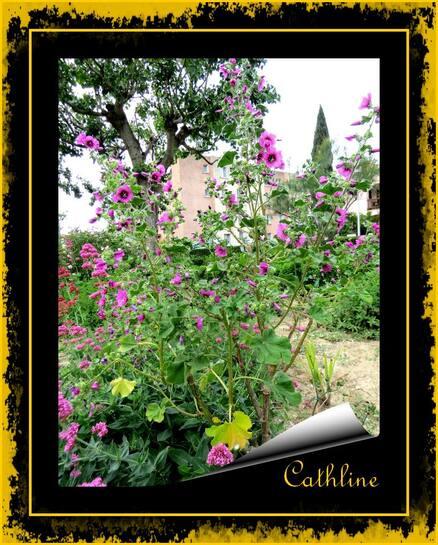 Au Jardin et avec la Lune 1er au 15 juin