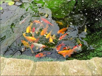Photos bassin à poissons (Ile aux papillons)