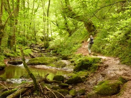 forêt, ruisseau