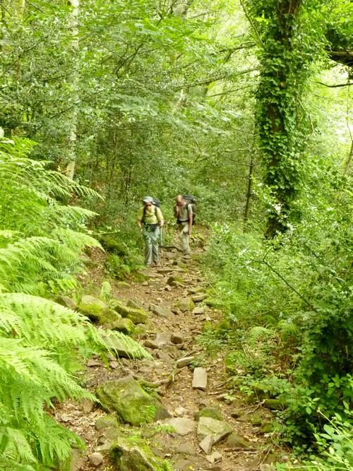 Dernier sentier avant Bidarray