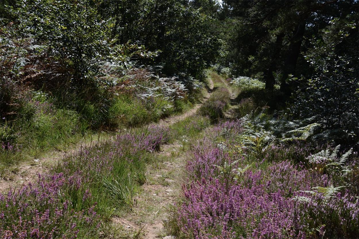 Un petit tour en forêt...