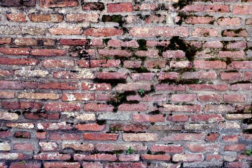 Un vieux mur en briques