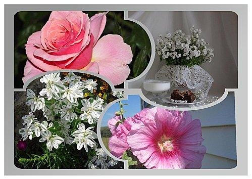 Rose--blanc.jpg