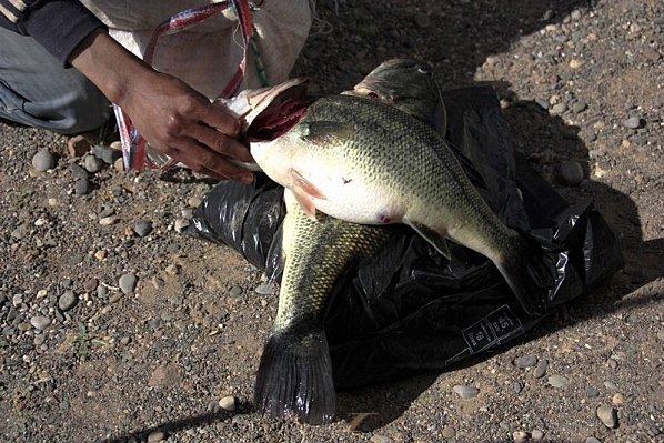 poisson-Bivouac-vers-Ouarzazate-050--2-.jpg