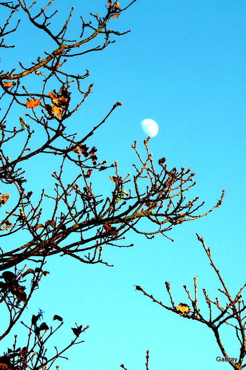 La lune en plein jour...