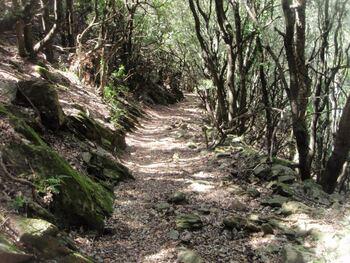 Le large chemin du vallon du Bousquet