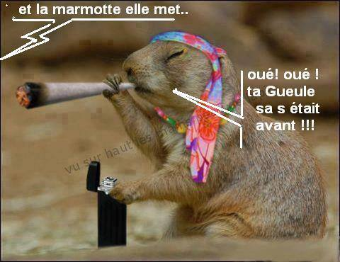 IMAGES INSOLITES !!!