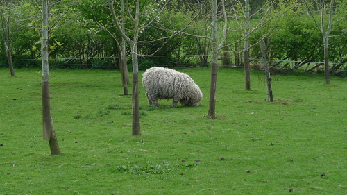 Back from the land of sheep