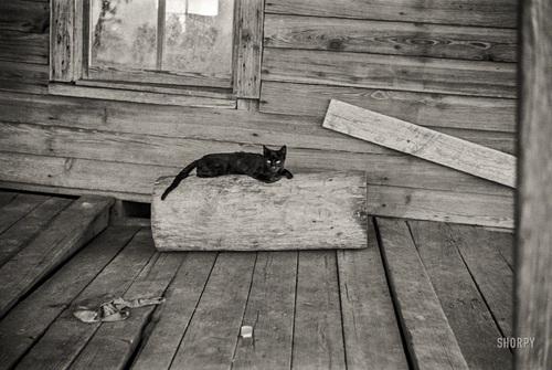 11 - Des chats  encore