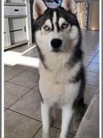 Neïko (9 mois)