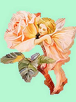 De l'églantine à la Rose