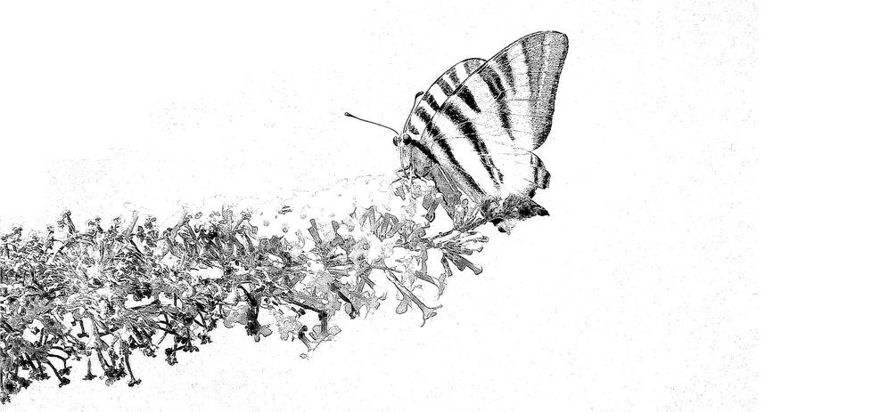 Carte blanche ou quand la photo devient dessin