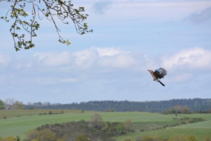 Oiseaux-2-5777.jpg