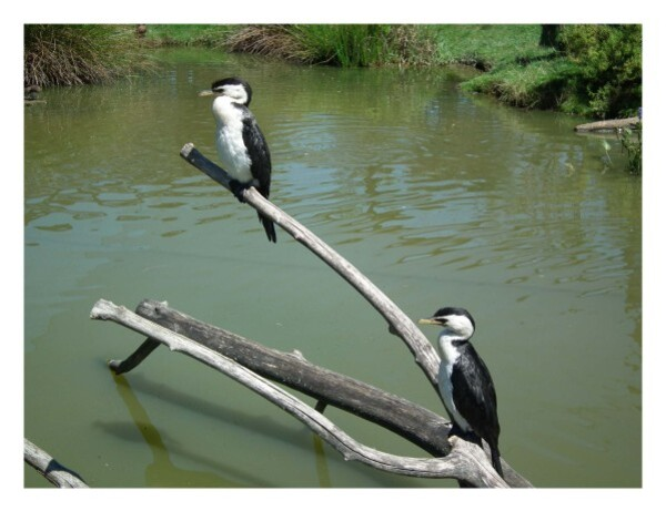 oiseaux-eau.jpg