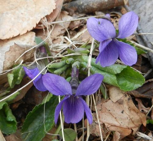 Fleurette sauvages