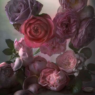 Profusion de fleurs(3)