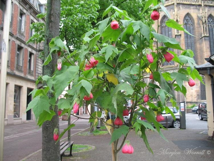 Fleurissement en ville