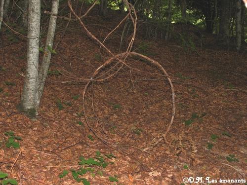 cercle dans la nature