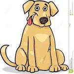 Wolu1200 : Notre chien labrador a été volé