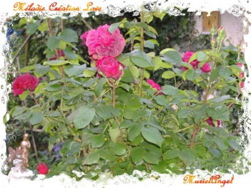 copirythe-roses-et-feuilles.JPG