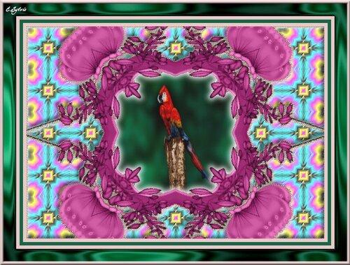 Perroquet humain