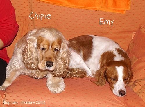 2011 oct chipie et emy