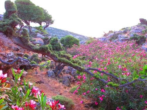 Le jardin de la Reine d'Ithaque
