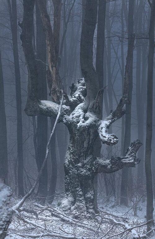 Deyan Kossev et ses arbres humains