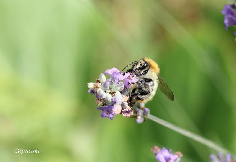 fleyrs-et-insectes 6852