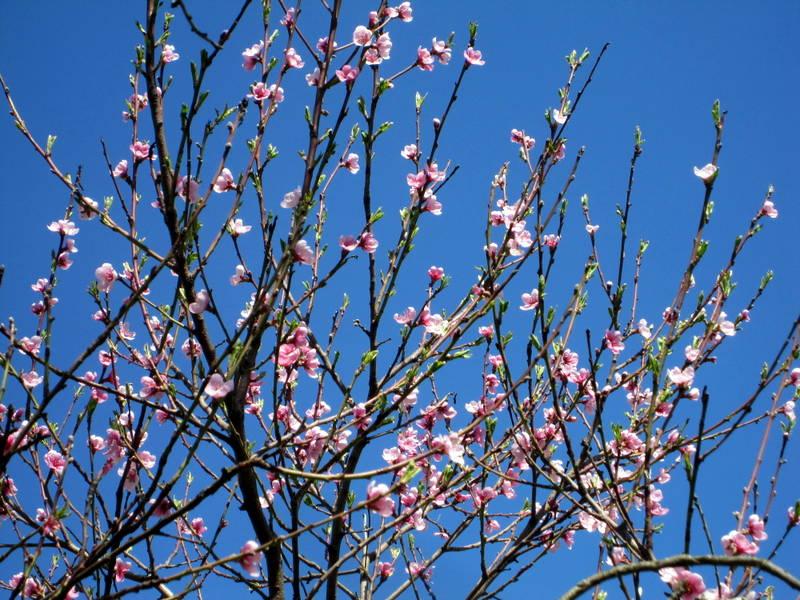 printemps hésitant