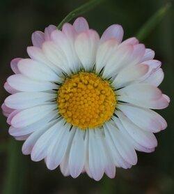 Différents types de fleurs
