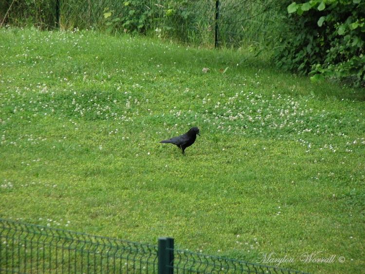Souffelweyersheim 67 : Histoire d'animaux