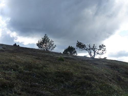 Paysages de l'Aigoual