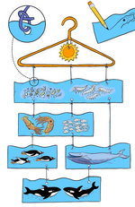 Albums et chaines alimentaires, mer, océan