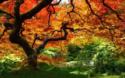Mabon - équinoxe d'automne