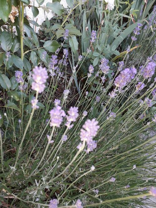Fleurs du jardin et un peu (encore)de travaux