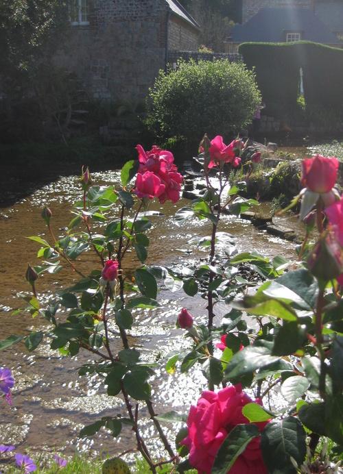 La rose du samedi géré par Jean Pierre - n°30