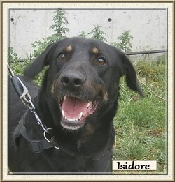 Le chien du mois: MAI = ISIDORE