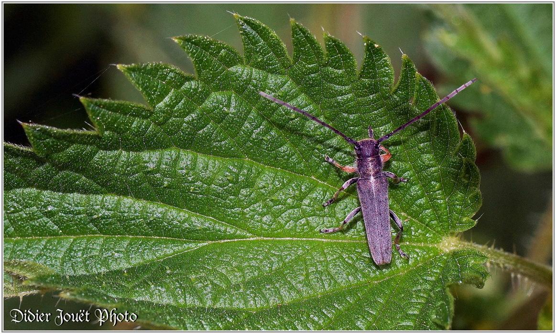 Z'autres... Insectes