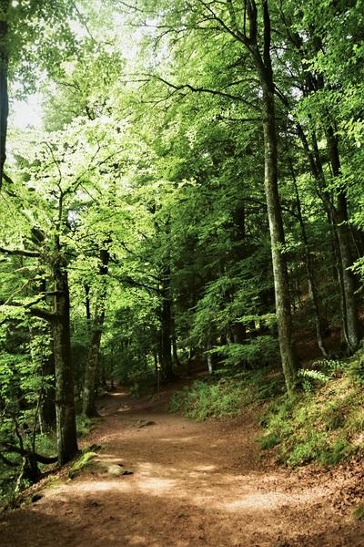 2016.08.19 Lac Pavin, Lac Gayme (Région Auvergne)