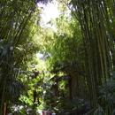 Bambouseraie d'Anduze - Photo : Fritz