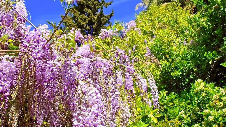 15 images de fleurs